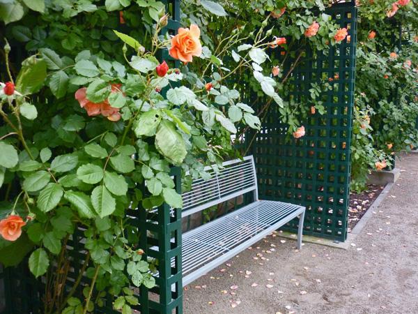 rajska-zahrada-02